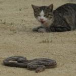 猫vs蛇 youtube動画で盗作された時の対処法!著作権の侵害で報告できる