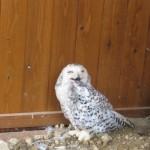 東さぬき市、白鳥動物園は動物との距離が近い!貴重なホワイトタイガーもここでは有名!