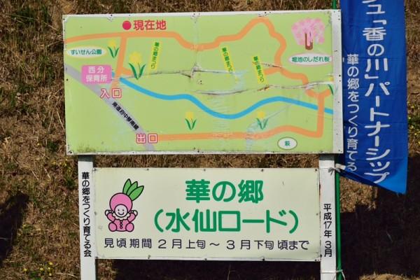水仙ロード
