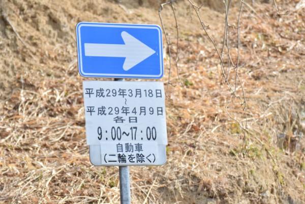 綾川枝垂桜 通行規制 一方通行