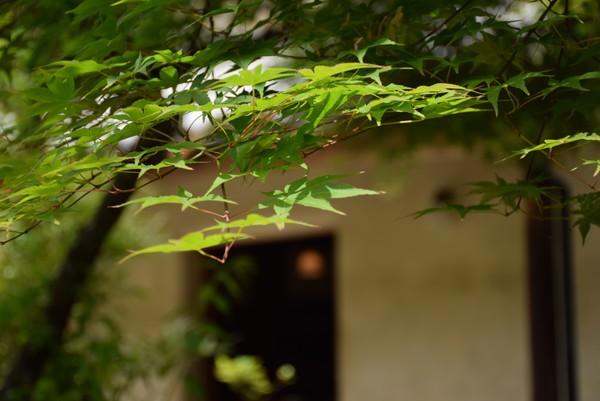 五風十雨の庭5