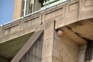 ダムに蜂の巣