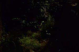 月明かりとホタル