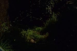 月明かりとホタル2