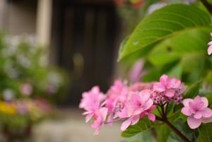 花ばたけの花