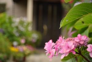 花ばたけの花2