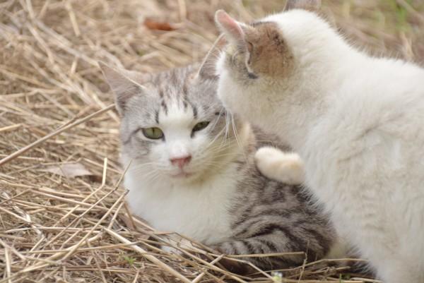 猫の嫌がる顔