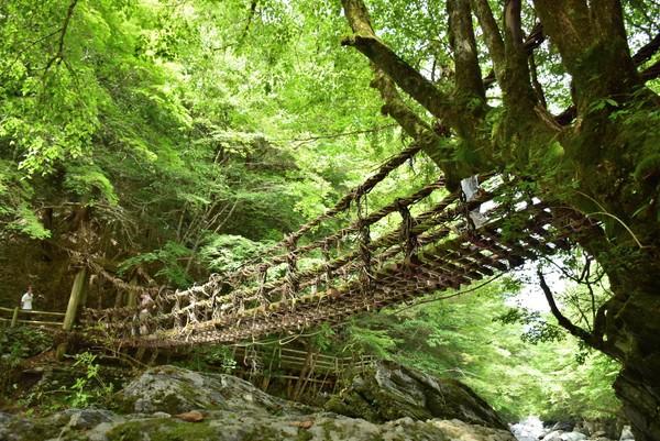 かずら橋 女橋