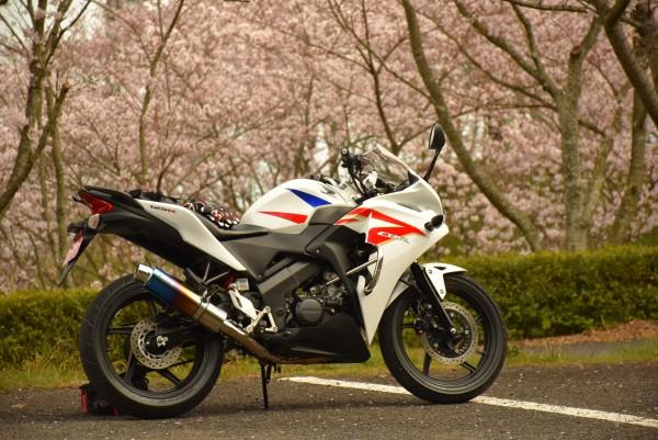 桜 CBR125R ジムカーナ仕様