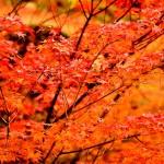 【フリー素材・無料画像集】晩秋の紅葉と冬を感じさせる風景、小物など