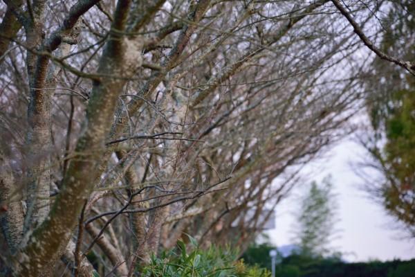枯れ木 冬 防寒