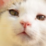 【フリー素材・無料画像集】動物写真!ネコのしぐさから顔のアップなど
