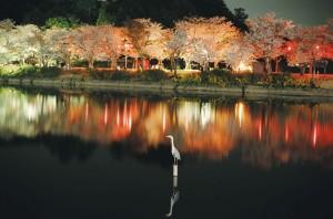 亀鶴公園2
