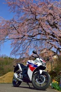 しだれ桜とバイク 綾川町