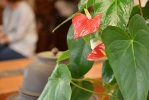 花ばたけの店内の花