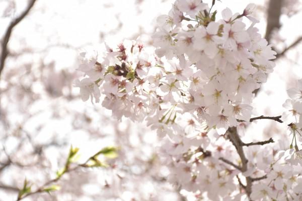 花の撮り方