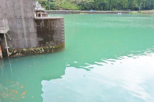 川口ダム 緑色