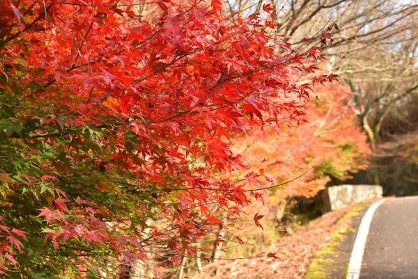 翠波高原 紅葉