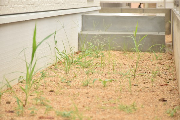 新築 雑草 草の手入れ 庭