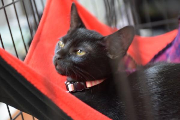 猫 ハンモック