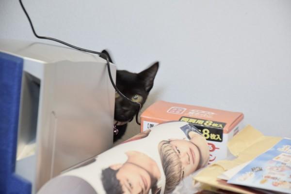 子猫 隠れる