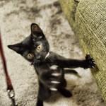 初めて猫を飼う時にやっておくべき3つのこと。懐いてくれない、ご飯を食べない、うんちをしない