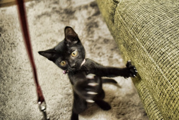 子猫 遊ぶ