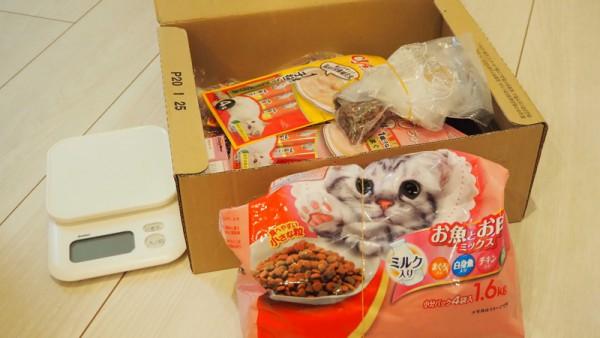 子猫 餌 キャットフード